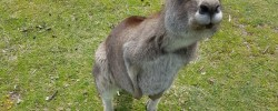 GUFF interviews, kangaroo, Earl Grey Editing, Elizabeth Fitzgerald