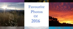 Earl Grey Editing's favourite photos of 2016
